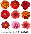 Collage of isolated red flowers - stock photo