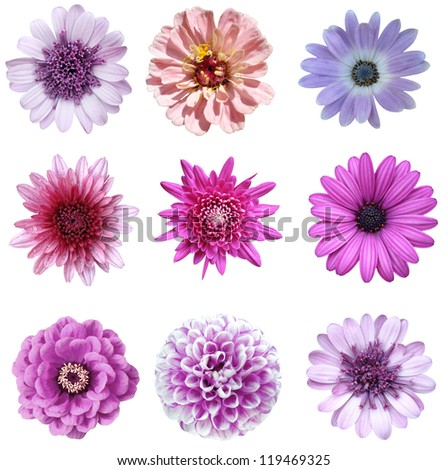 collage of isolated violet flowers - stock photo