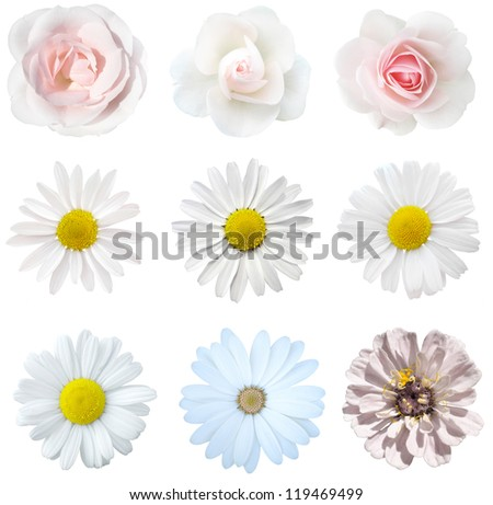 collage of isolated white flowers - stock photo