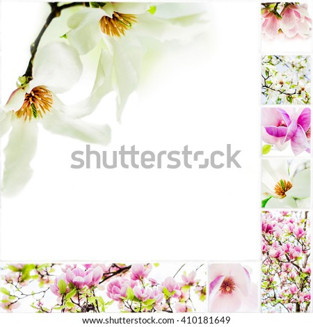 collage of magnolias on white background on white ceramic mosaic tile, natural raw style