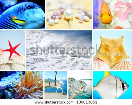 Collage of Marine life concept. - stock photo