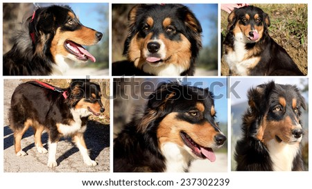 Collage of more dog photos. - stock photo