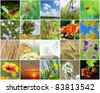 Collage of nature made from 20 pictures - stock photo