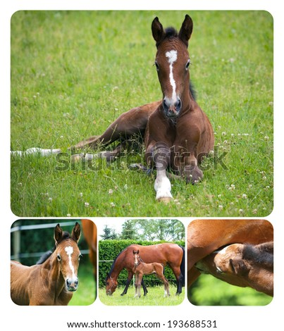 Collage of newborn foal with mare - stock photo