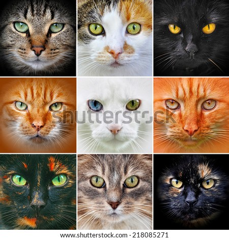 Collage of nine cat heads  - stock photo