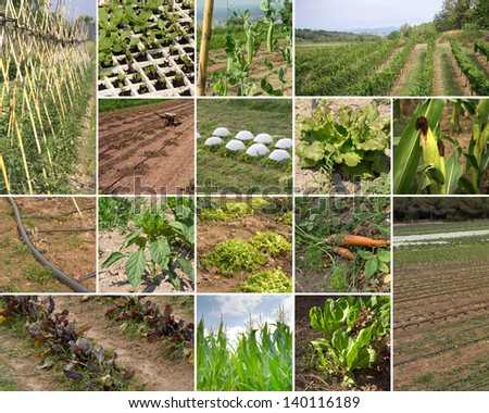 Collage  of organic agriculture farms photographs
