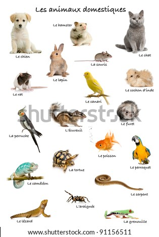 Collage of pets and animals in French in front of white background, studio shot