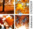 Collage of photos of autumn with autumn leaves and landscapes - stock photo