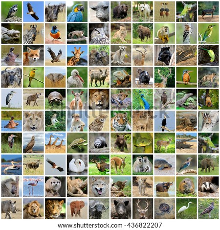 Collage Of 100 Photos Wildlife Animals And Birds