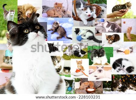 Collage of pretty cats - stock photo