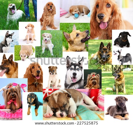 Collage of pretty dogs - stock photo