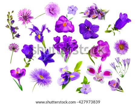 Collage of purple color flowers, isolated on white - stock photo
