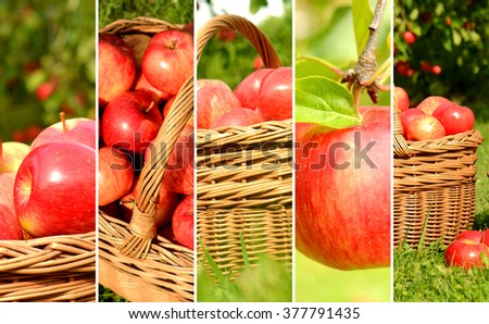 Collage of red apples in a wicker basket in a summer garden - stock photo