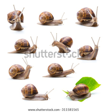 collage of snails on white background - stock photo