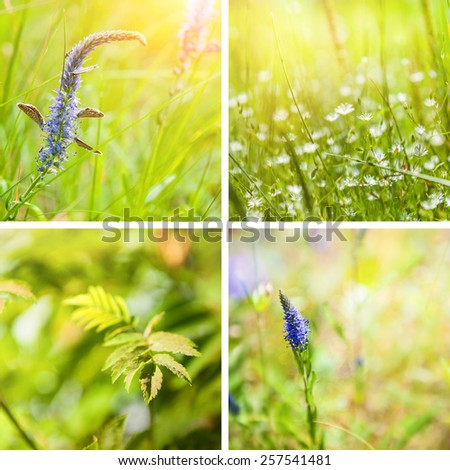 Collage of spring nature backgrounds. Beautiful green grass and flowers. Small depth of field. - stock photo