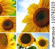 Collage of sunflowers and flower details - stock photo