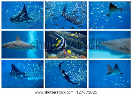 Collage of the colorful underwater life in Asia - stock photo