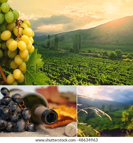 Collage of three photos - grapes, bottle and vineyard. - stock photo
