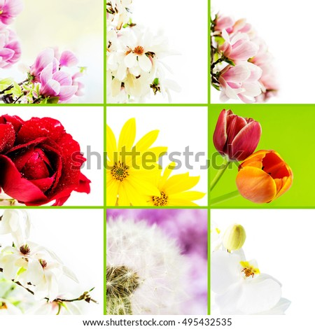 collage of various flowers on white background with green separation lines