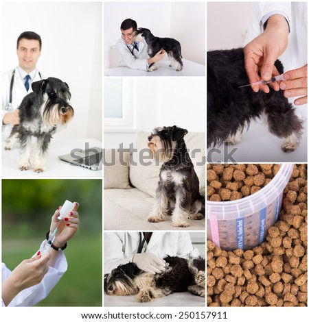 Collage of veterinarian and dog images in veterinarian ambulance - stock photo