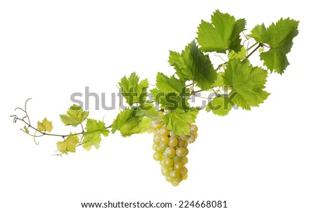 Collage of vine leaves and grape - stock photo