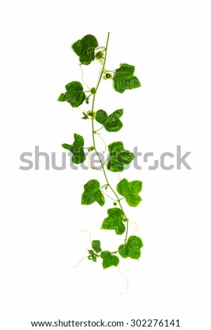Collage of vine leaves on white background. - stock photo
