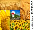 Collage of wheat - stock photo