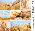 Collage of  wheat and bread - stock photo