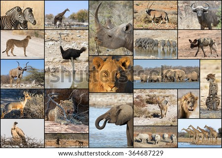 Collage of wild animals in Namibia's parks and reserves - stock photo