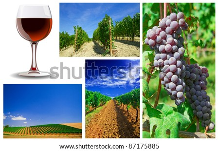 Collage of wine vineyard and grape cluster