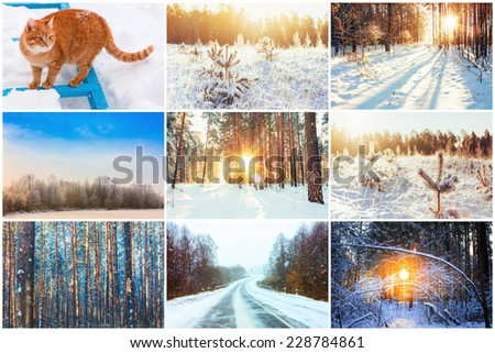 Collage, Set. Landscape With Winter Forest And Bright Sunbeams. Sunrise, Sunset In Cold Snowy Forest. Collage, Set - stock photo