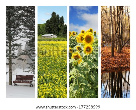Collage showing pictures of four season - stock photo