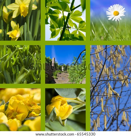Collage spring with daffodils, daisy, hazel tree, staircase and a beautiful blue sky
