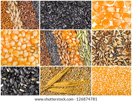 collage texture of Cereal Grains and Seeds
