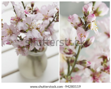 Collage with Blossoming almond flowers bouquet on white wooden backround . Shallow dof