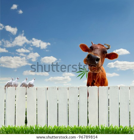 collage with cow, fence and cannabis - stock photo