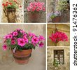 collage with flowerpot with flowering  petunia, Italy - stock photo