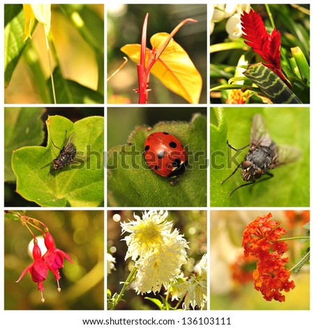 Collage with flowers, ladybird and flies - stock photo