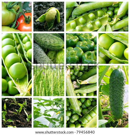 Collage with fresh natural vegetables. - stock photo