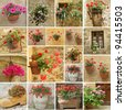 collage with images of flowerpots with geranium , petunias,cacti, impatiens and hortensia flowers, Italy - stock photo
