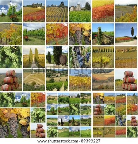 collage with italian vineyards in spring, summer and autumn - stock photo
