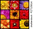 Collage with nine close-up shots of bright garden flowers on black background. Colors, nature, aromatherapy. - stock photo