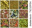 collage with olives - stock photo