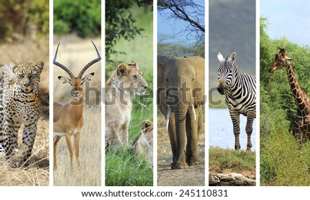 Collage with photo african animals - stock photo