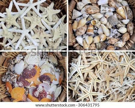 Collage with seashells. Collage with four seashells background - stock photo