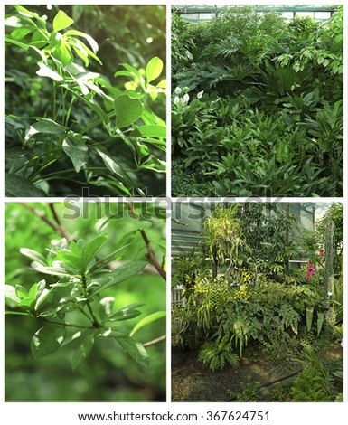 Collage with tropical plants in greenhouse - stock photo