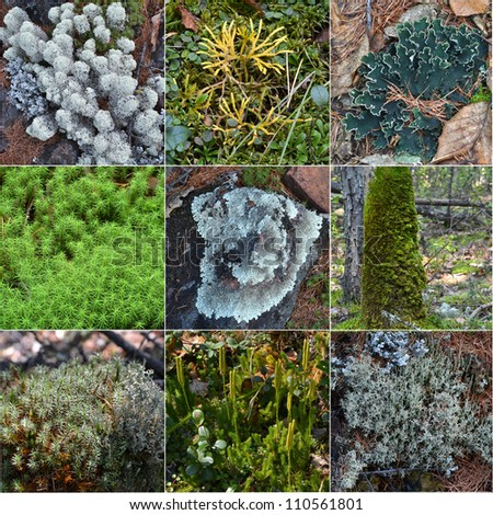 collage wood moss - stock photo