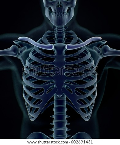 illustration human rib cage on white stock illustration 19934329, Skeleton