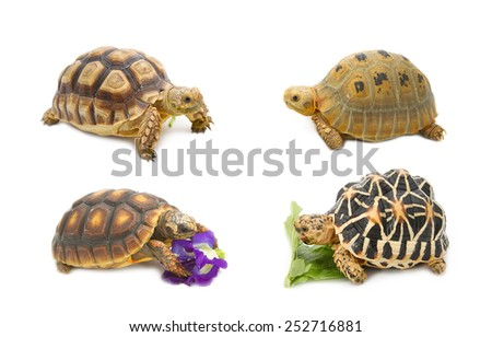 Collect of tortoise , exotic animal - stock photo