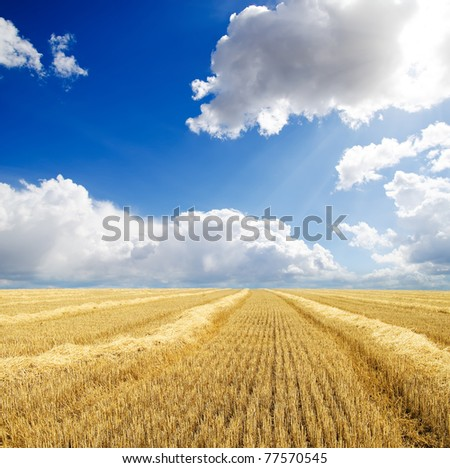collected harvest in windrows under cloudy sky - stock photo